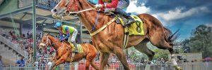 Horseball – Origens e Como Começar a Jogar