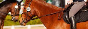 Importância do Mercado de Apostas para o Desenvolvimento do Horseball