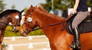 Imagem em destaque Importância do Mercado de Apostas para o Desenvolvimento do Horseball 300x166 - Imagem-em-destaque-Importância-do-Mercado-de-Apostas-para-o-Desenvolvimento-do-Horseball