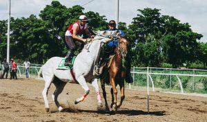 Postar imagem Conheça Todas as Regras do Horseball Equipas 300x176 - Postar-imagem-Conheça-Todas-as-Regras-do-Horseball-Equipas