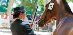Postar imagem Euro 2009 – Um Resumo da Competição Cavalo com número 300x144 - Postar-imagem-Euro-2009-–-Um-Resumo-da-Competição-Cavalo-com-número