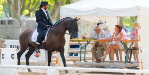 Postar imagem Importância do Mercado de Apostas para o Desenvolvimento do Horseball cavalo no evento 300x152 - Postar-imagem-Importância-do-Mercado-de-Apostas-para-o-Desenvolvimento-do-Horseball-cavalo-no-evento