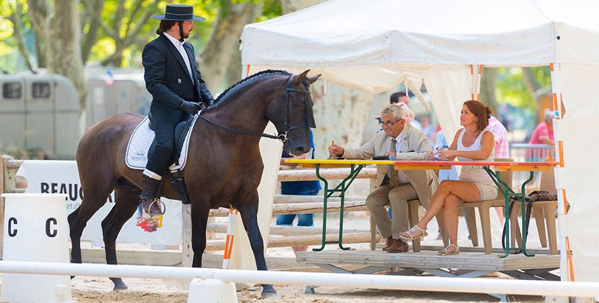 Postar imagem Importância do Mercado de Apostas para o Desenvolvimento do Horseball cavalo no evento - Importância do Mercado de Apostas para o Desenvolvimento do Horseball
